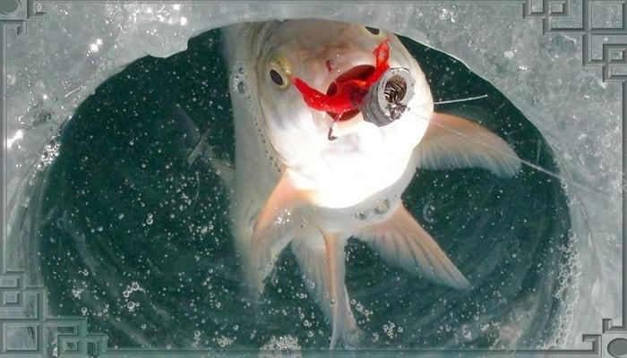 Рыба в проруби