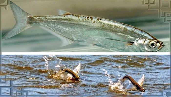 Стая рыб в водоеме