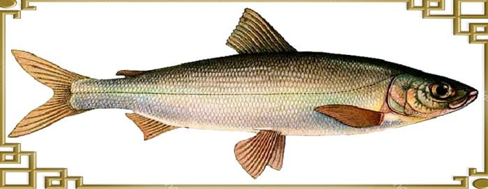 Тело рыбки сбоку