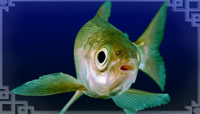 Морда рыбы на глубине