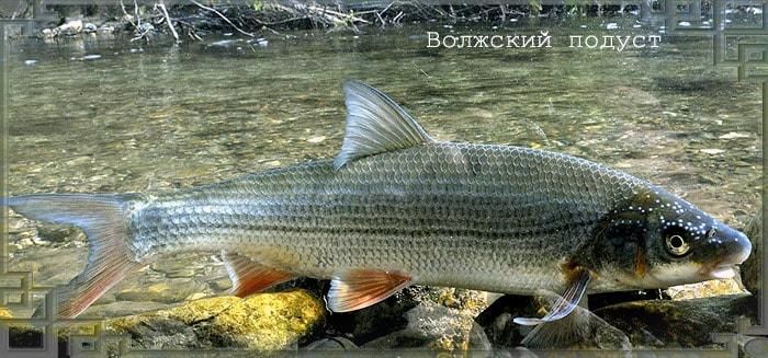 Рыба плывет в воде