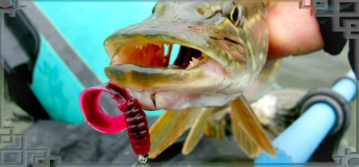 Твистер во рту щуки
