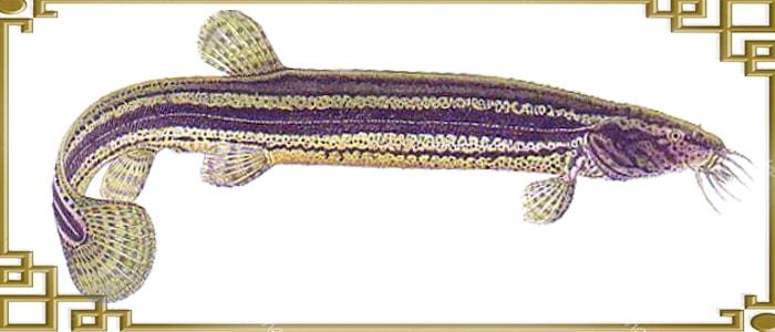Вид рыбы сбоку
