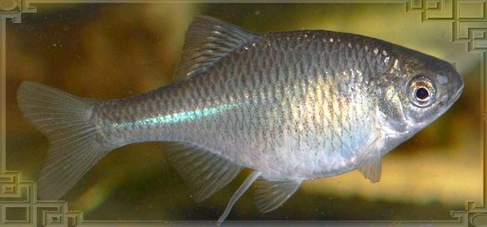 Рыбка с икрой