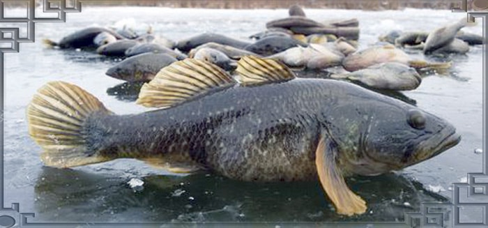 Зимняя рыбалка на ротана