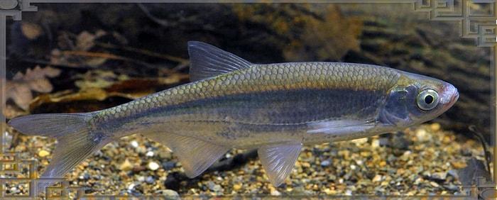 Рыбка стоит в воде