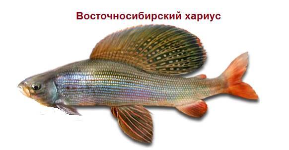 Восточно-сибирский
