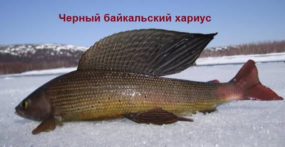 Байкальский
