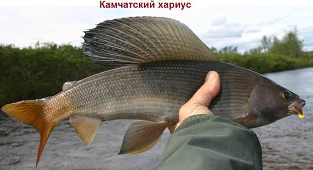 Камчатский