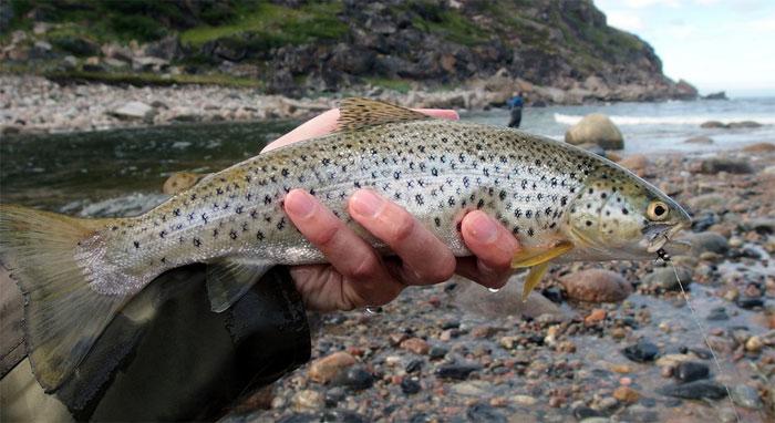 Ловля рыбы кумжа